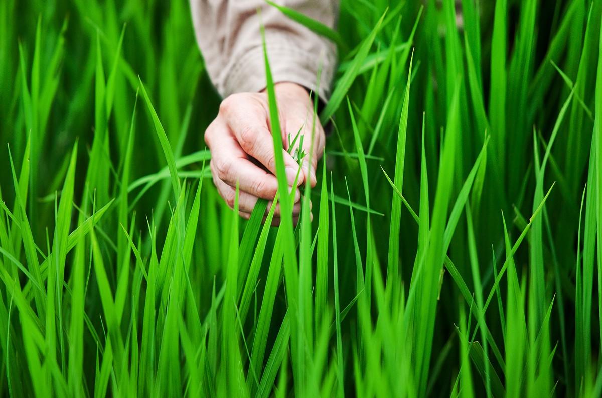 収穫量より味を優先