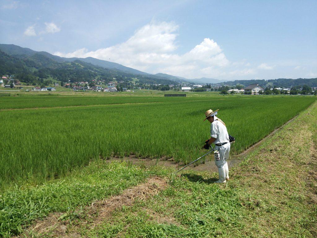 田んぼのあぜ草刈り作業