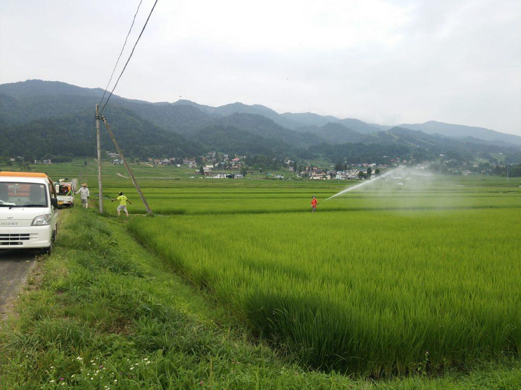 稲の防除作業