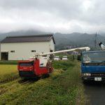 稲刈り9日目