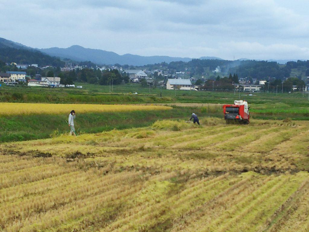 稲刈り20日目