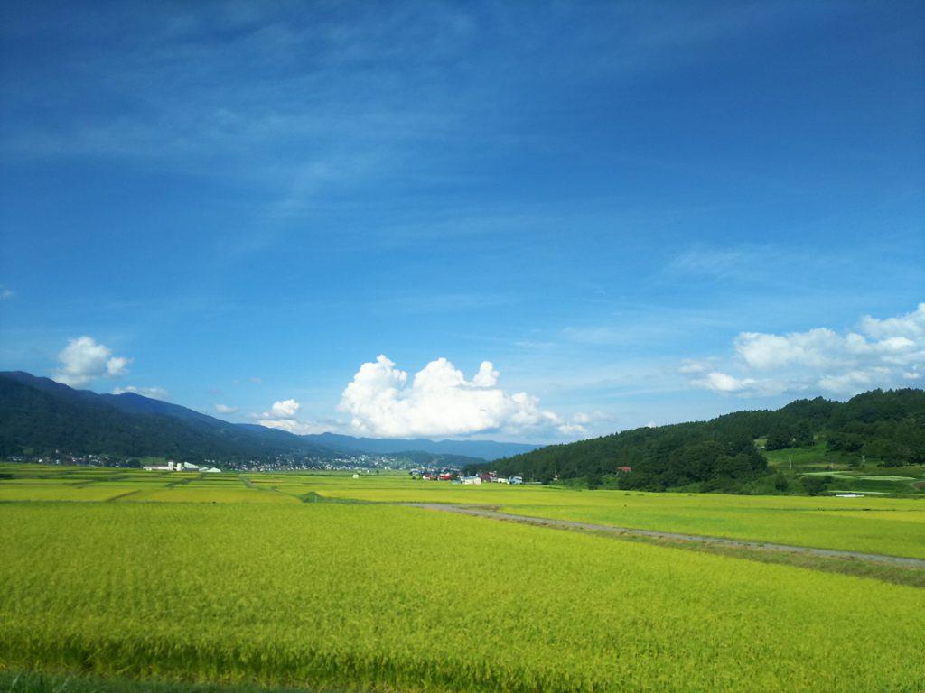 田んぼの景色 金崎さんちのお米