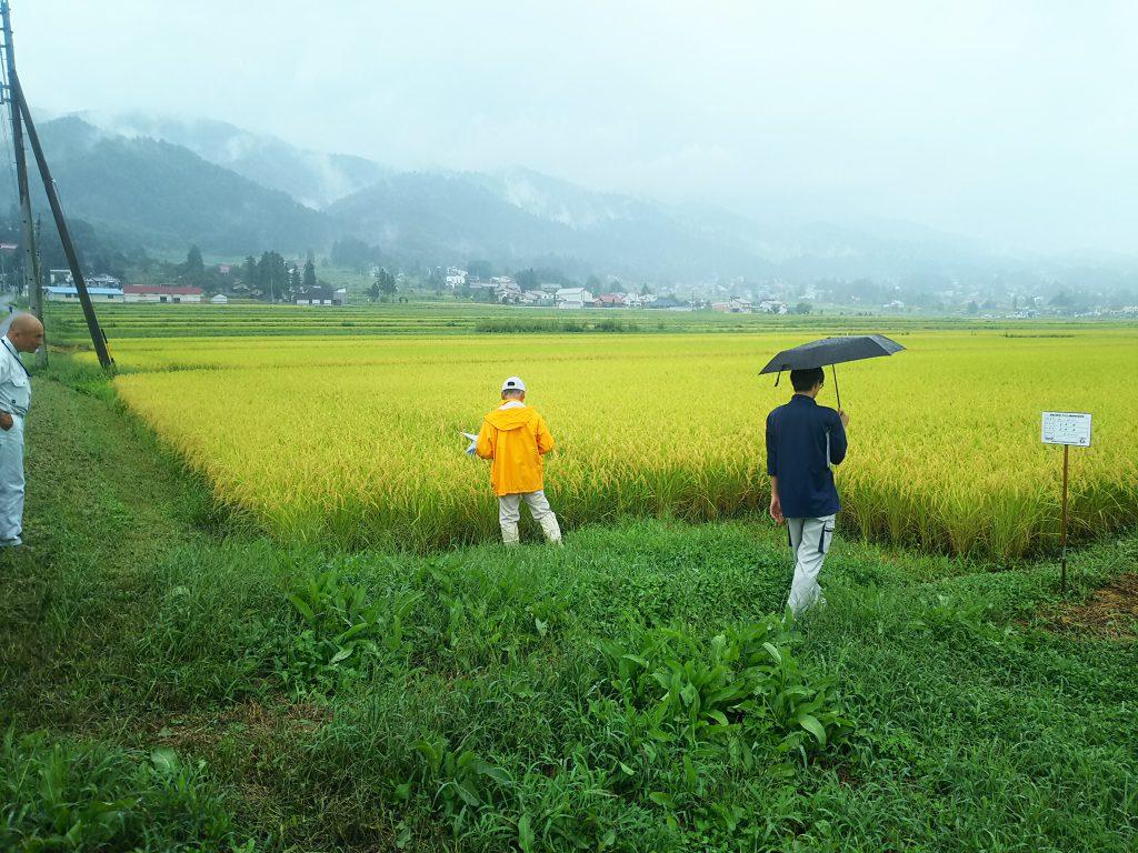 環境にやさしい農産物認証確認調査
