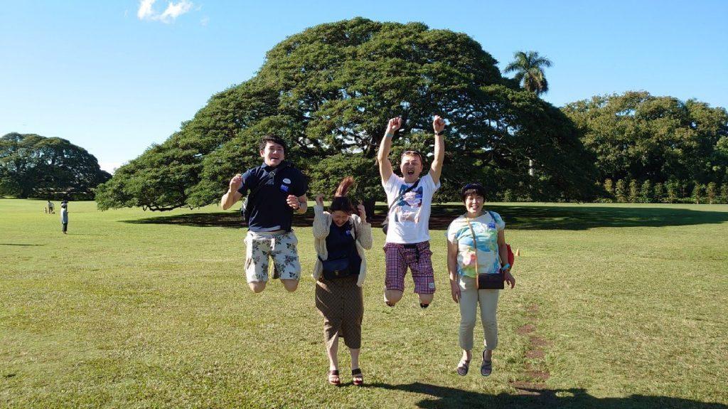 日立の木 ハワイオアフ島