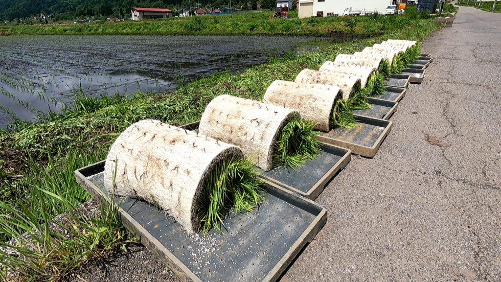稲の苗ロール