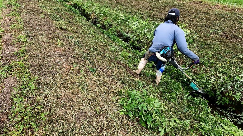 排水路沿い草刈り作業