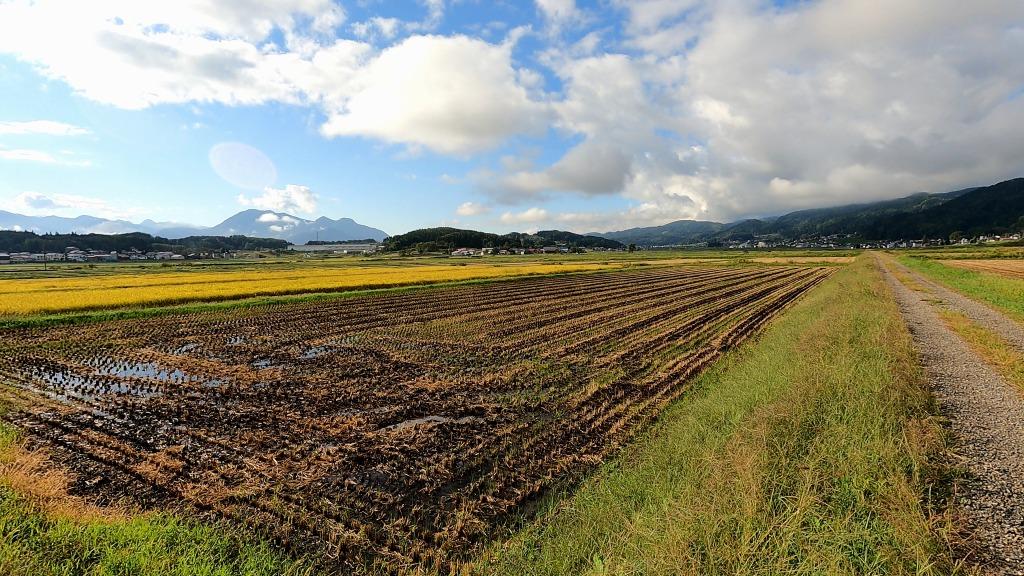 雨上がりの田んぼの景色